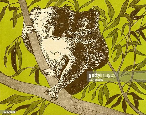 illustrations, cliparts, dessins animés et icônes de koala ours dans tree - koala