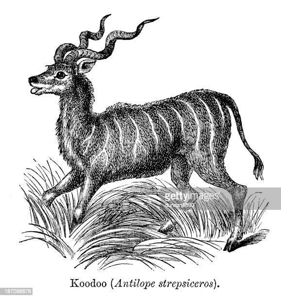 koodoo antilope - kudu stock illustrations, clip art, cartoons, & icons