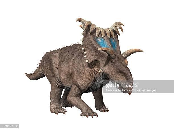 ilustraciones, imágenes clip art, dibujos animados e iconos de stock de kosmoceratops richardsoni is a ceratopsian dinosaur from the late cretaceous period of utah. - paleozoología