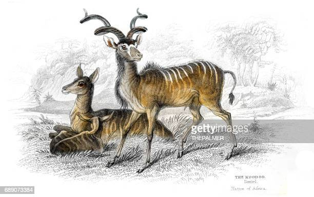 kudu antelope lithograph 1884 - kudu stock illustrations, clip art, cartoons, & icons