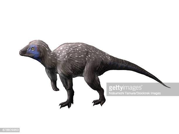Kulindadromeus is a neornithischian from the Jurassic period of Siberia.