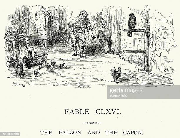 la fontaine's fables - falcon and the capon - falconry stock illustrations