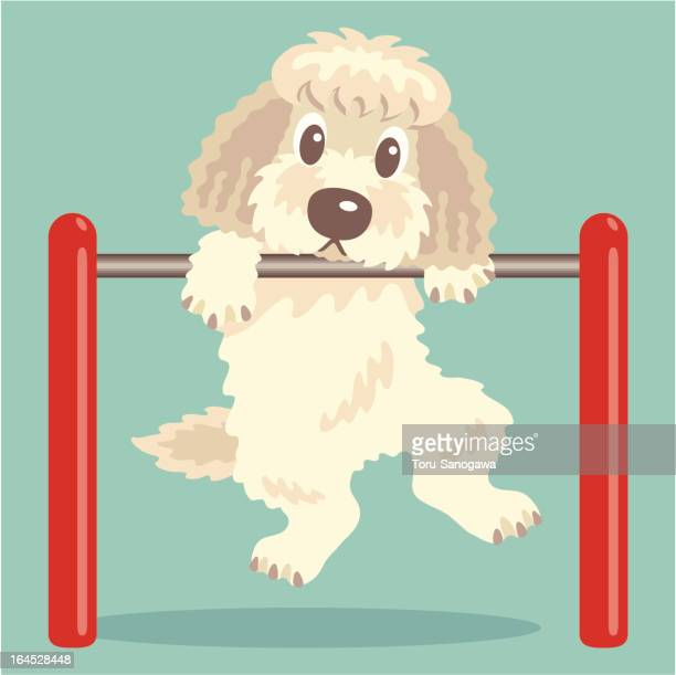 Labradoodle,Goldendoodle exercise