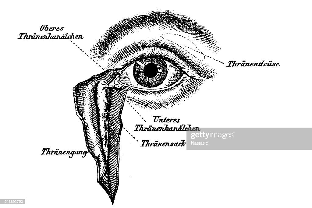Lacrimal Apparatus Stock Illustration | Getty Images