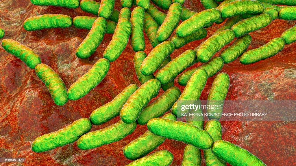 Lactobacillus bacteria, illustration : stock illustration