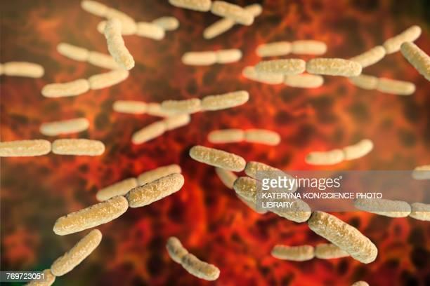 lactobacillus crispatus bacteria, illustration - micro organism stock illustrations, clip art, cartoons, & icons