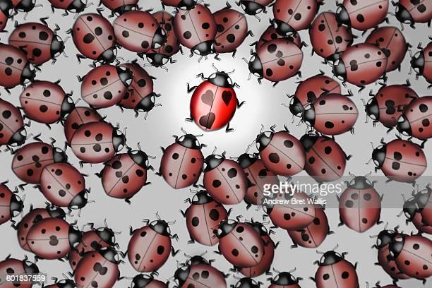 ilustraciones, imágenes clip art, dibujos animados e iconos de stock de ladybird admirers drawn to a single love bug. - grupo grande de animales