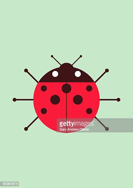 illustrations, cliparts, dessins animés et icônes de ladybug  - coccinelle