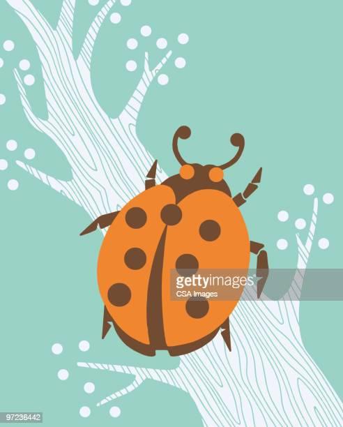 ladybug - branch stock illustrations