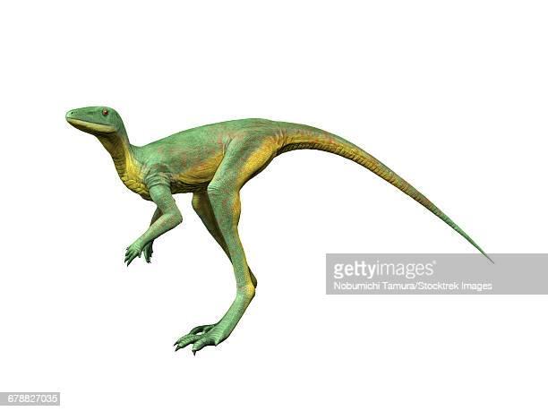 ilustraciones, imágenes clip art, dibujos animados e iconos de stock de lagerpeton chanarensis is an extinct dinosauromorph from the middle triassic of argentina. - triásico
