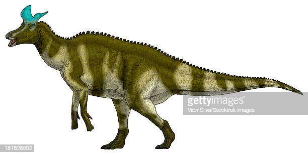 Lambeosaurus lambei, a hadrosaurid dinosaur from the Late Cretaceous Period.