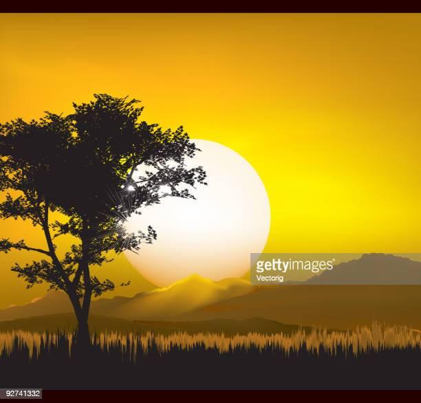 illustrations, cliparts, dessins animés et icônes de paysage au coucher du soleil - afrique paysage