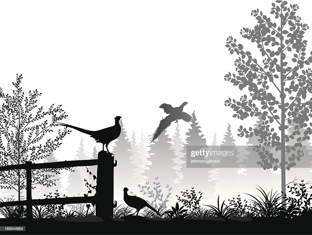 Landscape with pheasants : stock vector