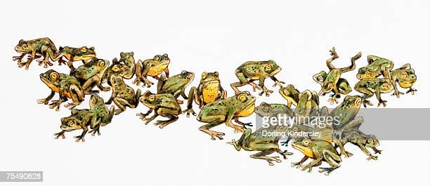 large adult group of frogs, with green and yellow skin - webbed foot stock illustrations, clip art, cartoons, & icons