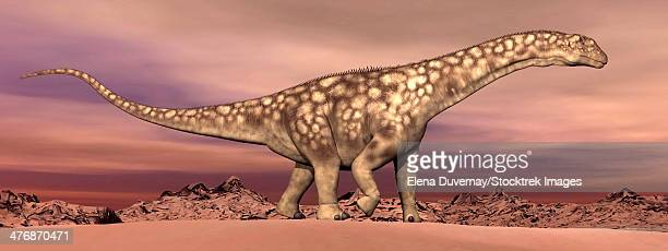 Large Argentinosaurus dinosaur walking quietly in the desert by dawn.