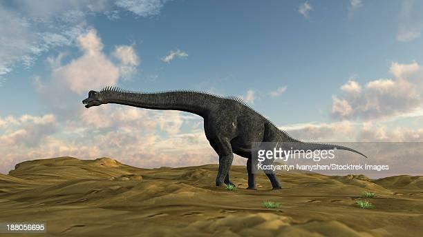 Large Brachiosaurus in a barren evnironment.