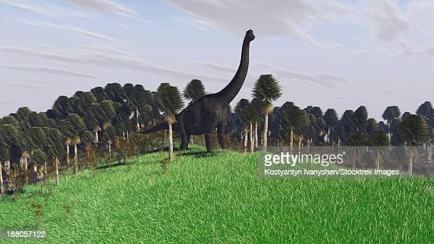 Large Brachiosaurus in an open field.