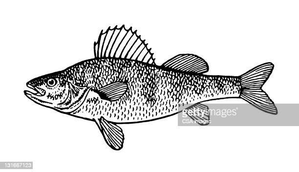 illustrations, cliparts, dessins animés et icônes de large fish - poisson