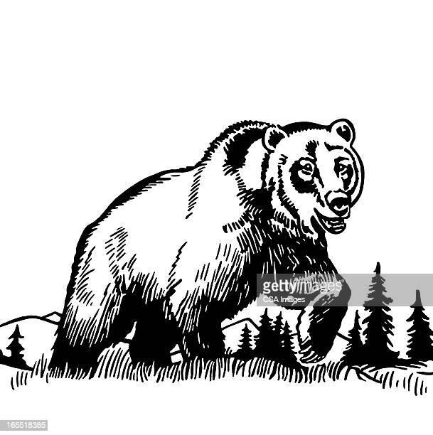 illustrations, cliparts, dessins animés et icônes de grand ours grizzly - un seul animal