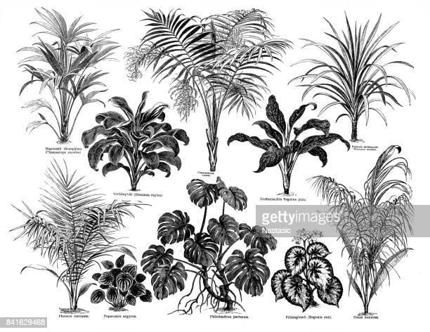 ilustrações, clipart, desenhos animados e ícones de grandes folhas de plantas - gravura