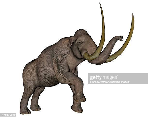 Large mammoth, white background.