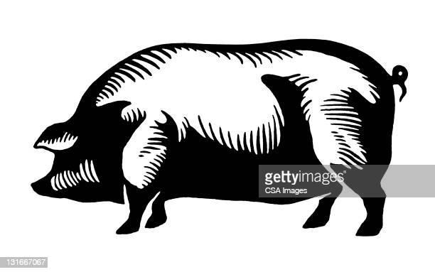 large pig - pig stock illustrations