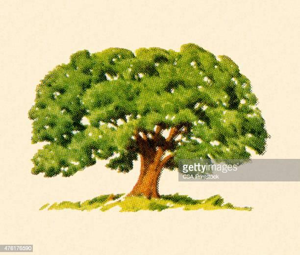 large tree - family tree stock illustrations, clip art, cartoons, & icons