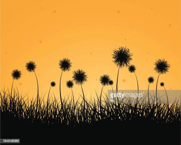 late summer - pollen stock illustrations, clip art, cartoons, & icons