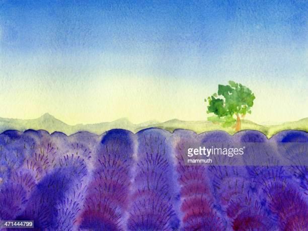 ilustraciones, imágenes clip art, dibujos animados e iconos de stock de campo de lavanda en provence - lavanda