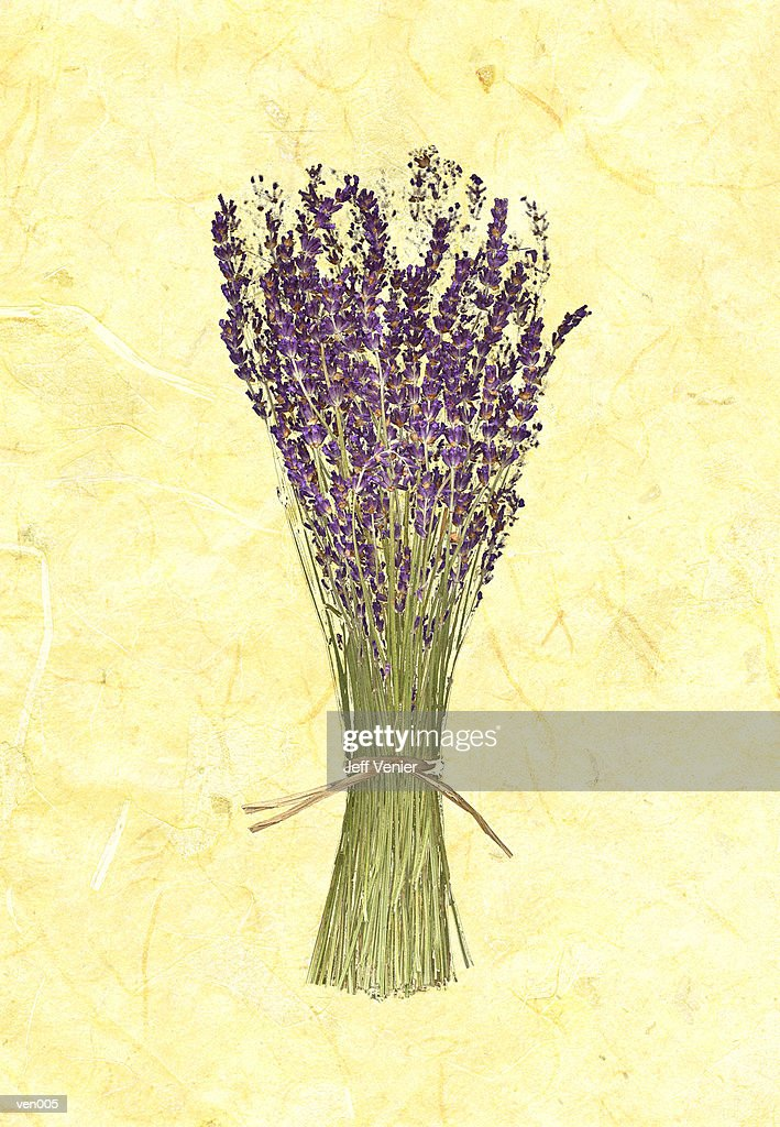 Lavender on Marble Background : Stock Illustration
