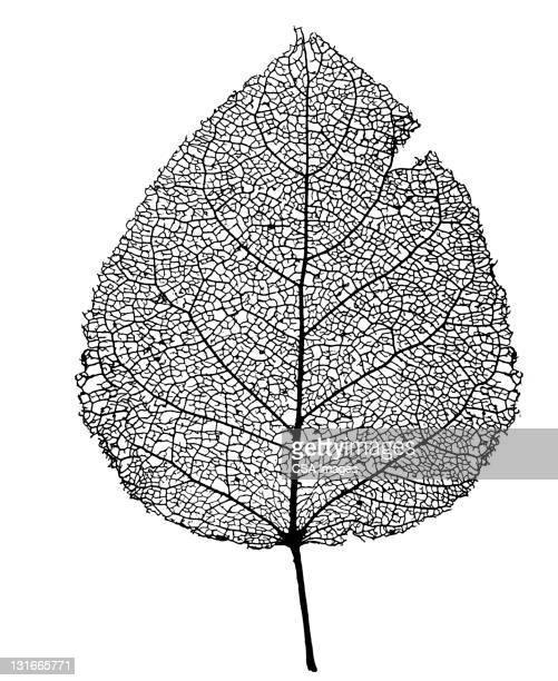 leaf - black and white stock illustrations