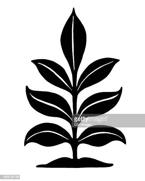 leafy plant - growth stock illustrations