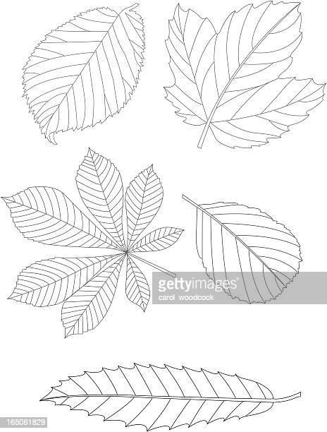 illustrations, cliparts, dessins animés et icônes de feuilles de - châtaigne