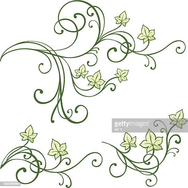 ilustraciones, imágenes clip art, dibujos animados e iconos de stock de hojas - enredadera