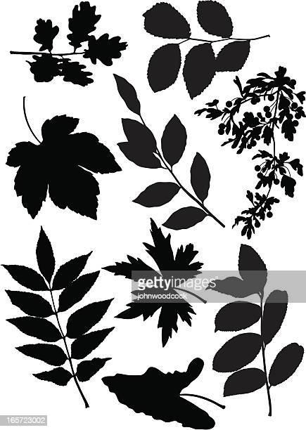 ilustrações, clipart, desenhos animados e ícones de folhas - pilritreiro