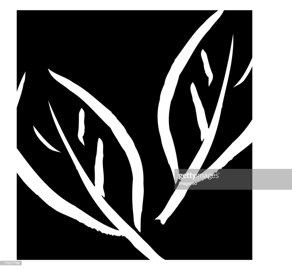 leaves in square b&w : Illustration