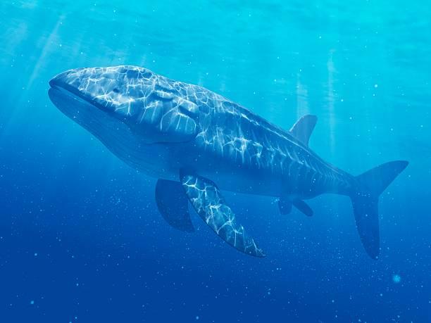 Leedsichthys prehistoric fish, artwork