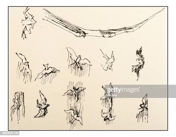 1 206 Bird Flying Drawing High Res Illustrations Getty Images