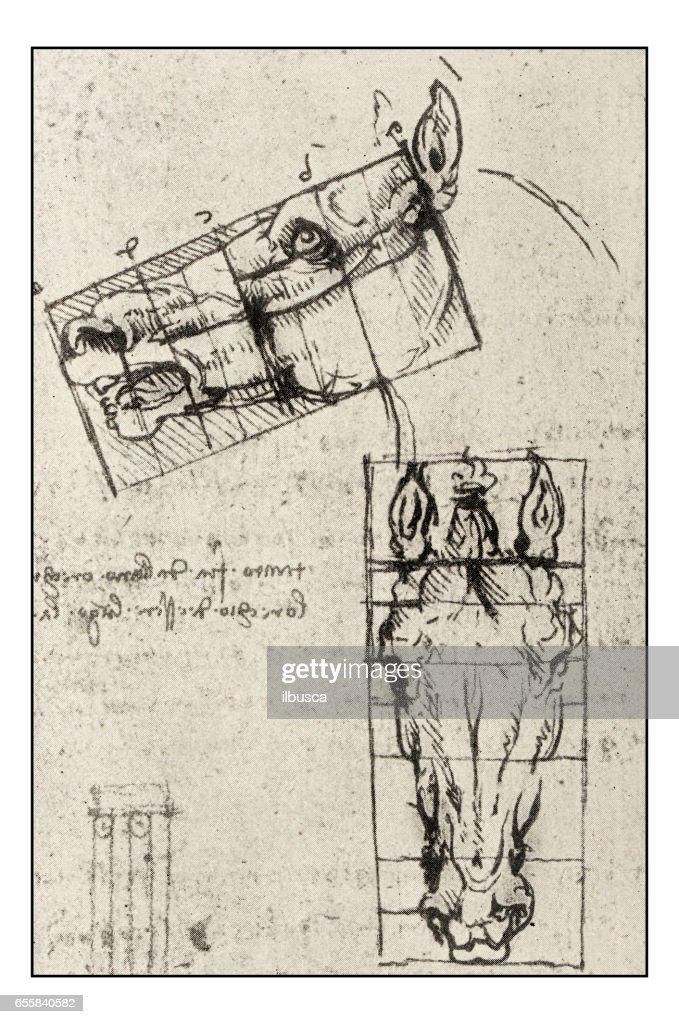 Leonardos Sketches And Drawings Horse High Res Vector Graphic Getty Images