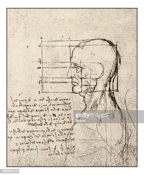 leonardo's sketches and drawings: man head sketch - human head stock illustrations, clip art, cartoons, & icons