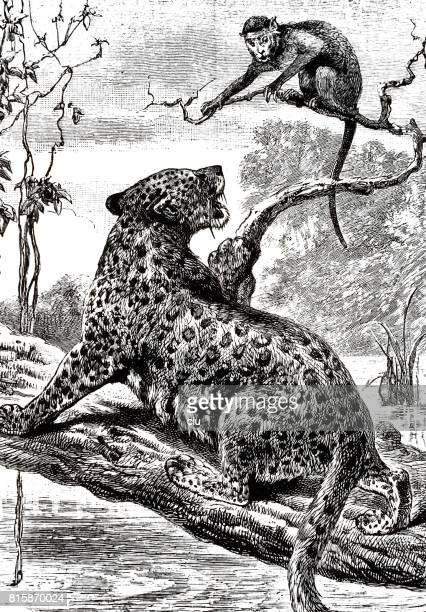 Leopard and monkey sitting on branches crying
