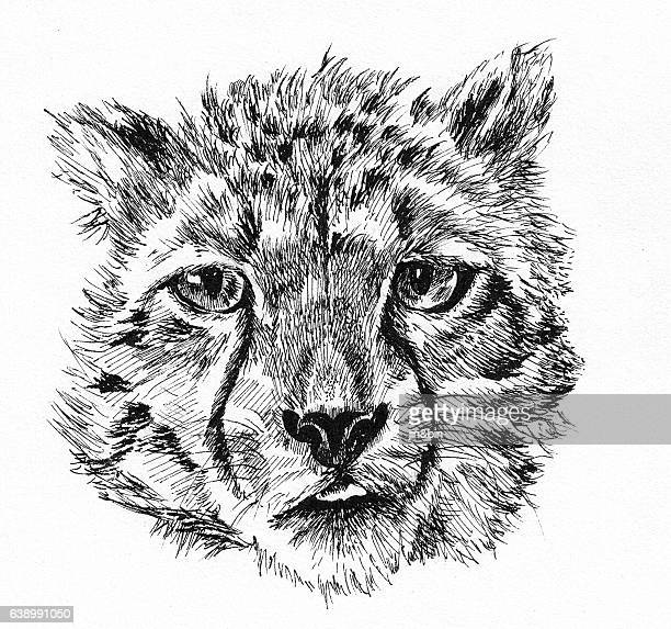 leopard baby head sketch hand drawn illustration on white background