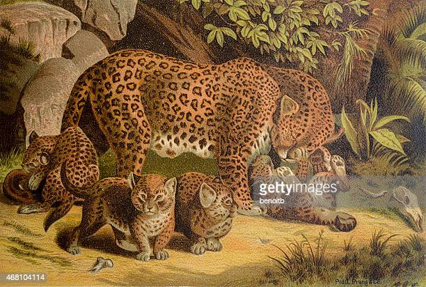 leopard female with pups - group of animals stock illustrations, clip art, cartoons, & icons