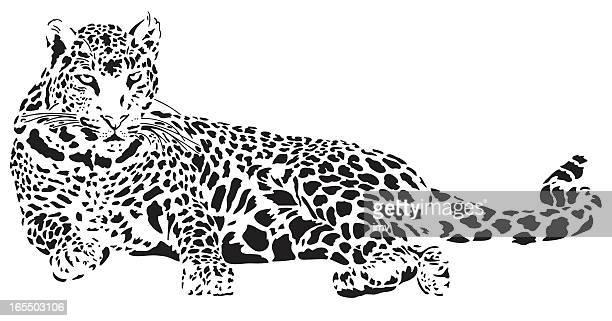 ilustraciones, imágenes clip art, dibujos animados e iconos de stock de leopardo ilustración - leopardo