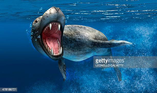 leopard seal, artwork - leopard seal stock illustrations