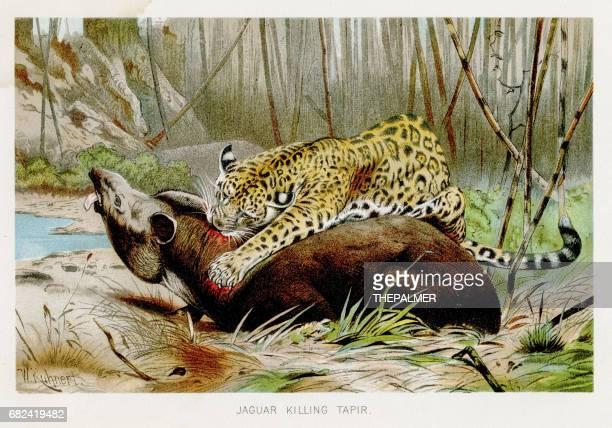 Leopards  lithograph 1894