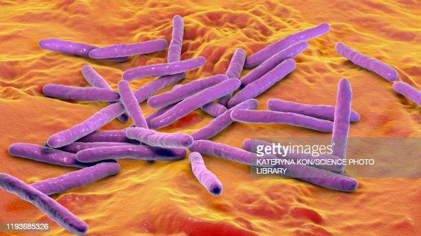 leprosy bacteria, illustration - leprosy stock illustrations