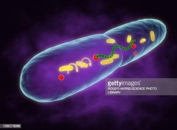 ilustrações de stock, clip art, desenhos animados e ícones de leprosy bacteria, illustration - lepra