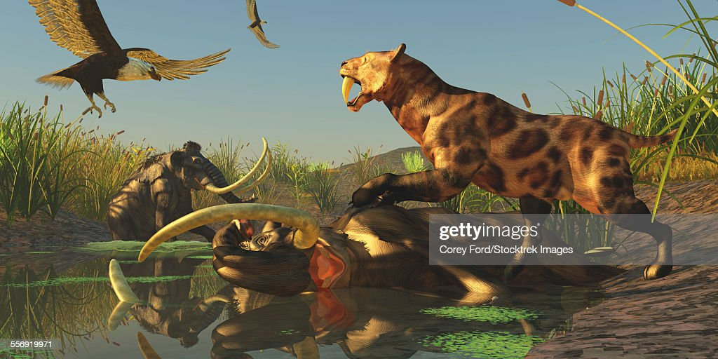 Life comes to an end for a Woolly Mammoth after a valiant struggle to get out of a bog : Stock Illustration