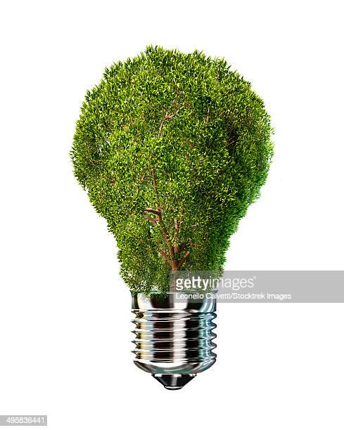 light bulb with tree inside glass, isolated on white background. - out of context点のイラスト素材/クリップアート素材/マンガ素材/アイコン素材
